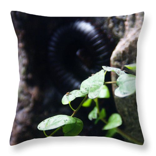 Millipede Throw Pillow featuring the photograph Arthropoda by Linda Shafer