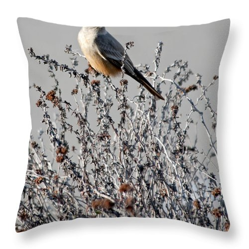 Ash-throated Flycatcher Throw Pillow featuring the photograph Ash-throated Flycatcher by David Chatterton