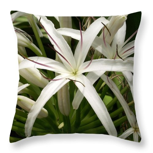 Flower Throw Pillow featuring the photograph Asiatic Poison Lily by Amy Fose