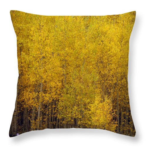 Fall Colors Throw Pillow featuring the photograph Aspen Fall 2 by Marty Koch