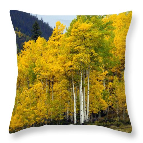 Fall Colors Throw Pillow featuring the photograph Aspen Fall 3 by Marty Koch