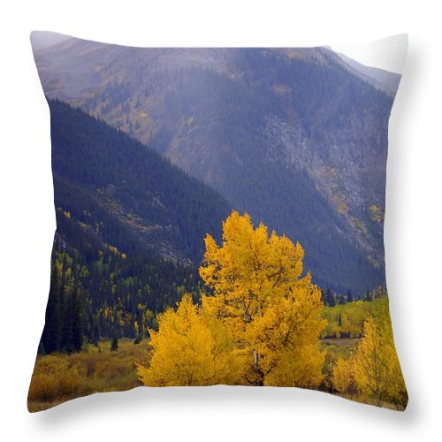 Fall Colors Throw Pillow featuring the photograph Aspen Fall 4 by Marty Koch