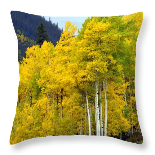 Fall Colors Throw Pillow featuring the photograph Aspen Fall by Marty Koch