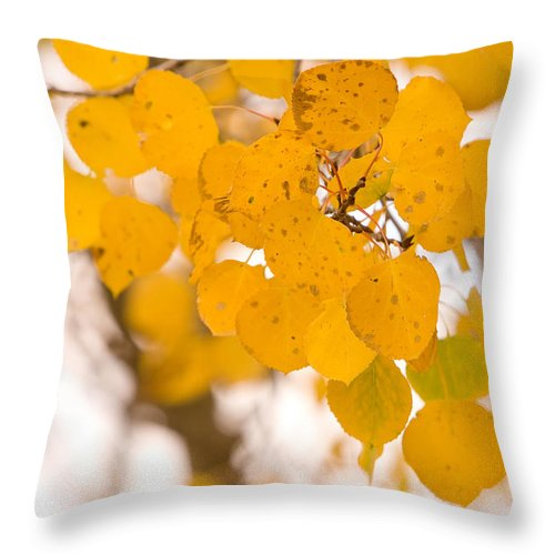 Trees Throw Pillow featuring the photograph Aspen Leaves by James BO Insogna