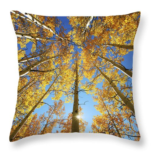 Aspen Throw Pillow featuring the photograph Aspen Tree Canopy 2 by Ron Dahlquist - Printscapes