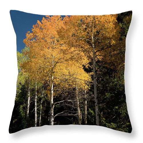 Grand Teton Throw Pillow featuring the photograph Aspens And Sky by Steve Stuller