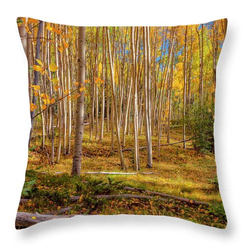 Aspen Throw Pillow featuring the photograph Aspens In Autumn 12 - Santa Fe National Forest New Mexico by Brian Harig