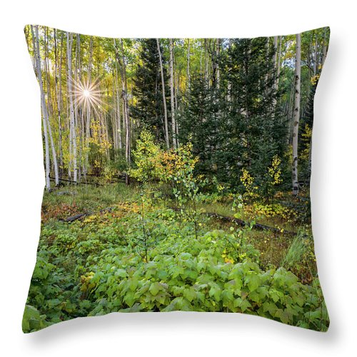 Aspen Throw Pillow featuring the photograph Aspens In Autumn 5 - Santa Fe National Forest New Mexico by Brian Harig