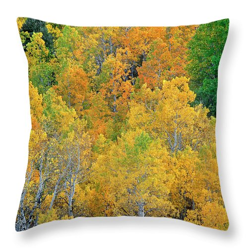 North America Throw Pillow featuring the photograph Aspens In Fall Eastern Sierras California by Dave Welling