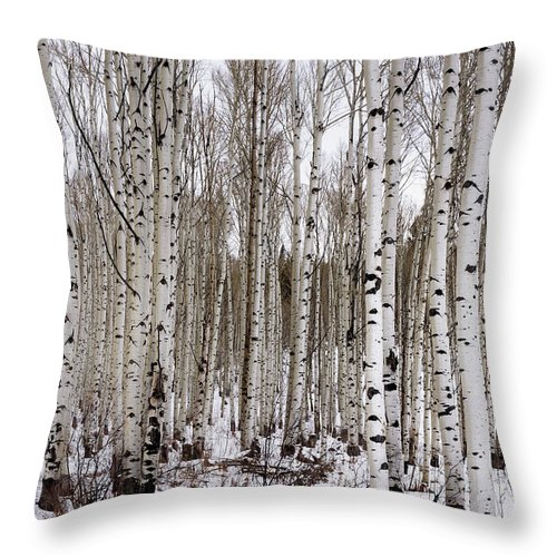 Aspen Throw Pillow featuring the photograph Aspens In Winter - Colorado by Brian Harig