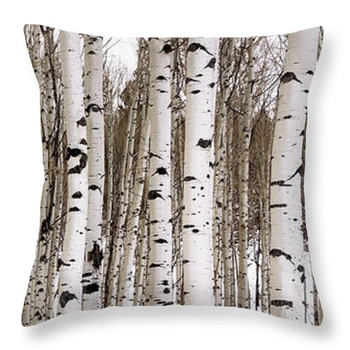 Aspen Throw Pillow featuring the photograph Aspens In Winter Panorama - Colorado by Brian Harig