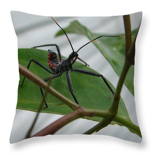 Insect Red Black Green Leaf Throw Pillow featuring the photograph Assassin Bug by Luciana Seymour