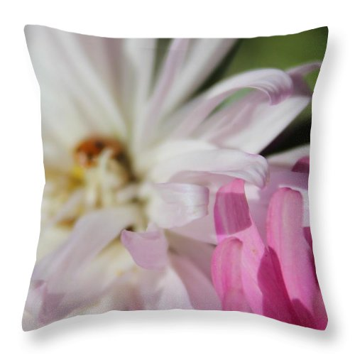Aster Throw Pillow featuring the photograph Aster Pink by LKB Art and Photography