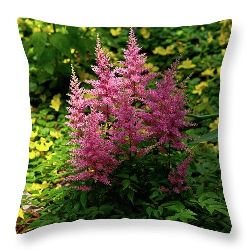 Astillbe Throw Pillow featuring the photograph Astillbe In Light And Shadow by Douglas Barnett