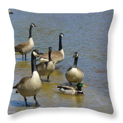 Geese Throw Pillow featuring the photograph At Home In A Crowd by Peggy King