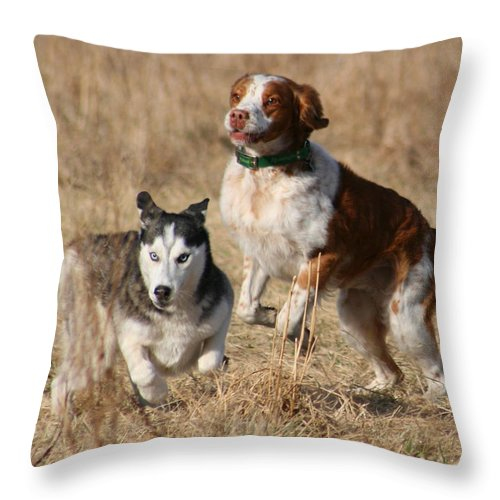 Animal Throw Pillow featuring the photograph At Play by David Dunham