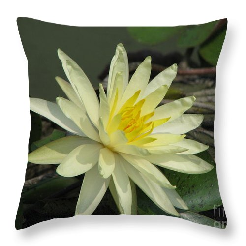 Lilly Throw Pillow featuring the photograph At The Pond by Amanda Barcon