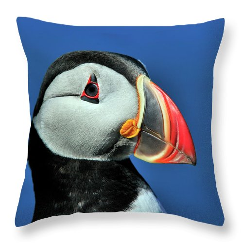 Atlantic Puffin Throw Pillow featuring the photograph Atlantic Puffin by Tony Beck