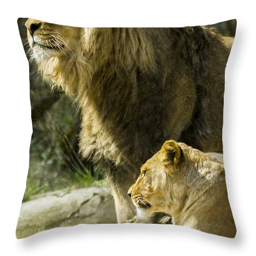 Animals Throw Pillow featuring the photograph Attention Captured by Albert Seger