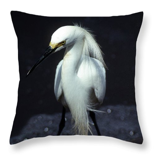 Egret Throw Pillow featuring the photograph Attitude by Skip Willits
