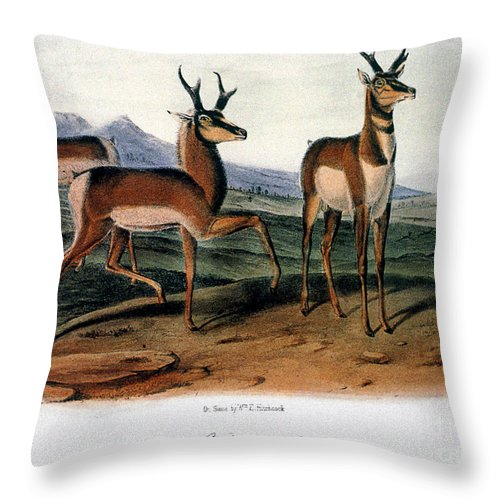 1846 Throw Pillow featuring the photograph Audubon: Antelope, 1846 by Granger