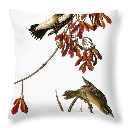 1838 Throw Pillow featuring the photograph Audubon: Bobolink by Granger