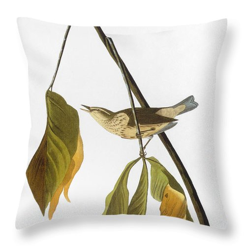 1827 Throw Pillow featuring the photograph Audubon: Thrush, 1827 by Granger