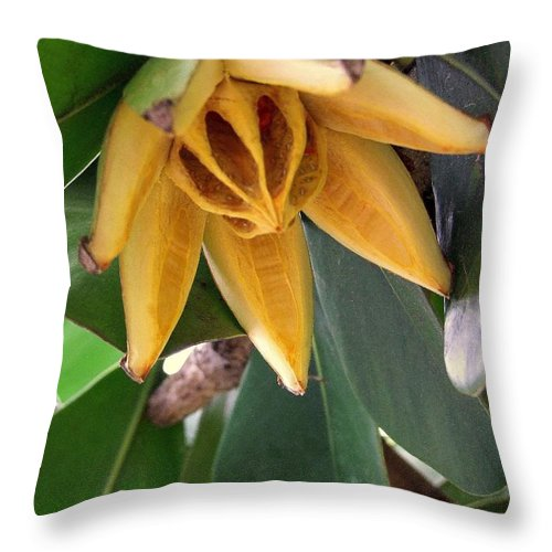 Autograph Tree Throw Pillow featuring the photograph Autograph Tree Seed Pod by Mary Deal