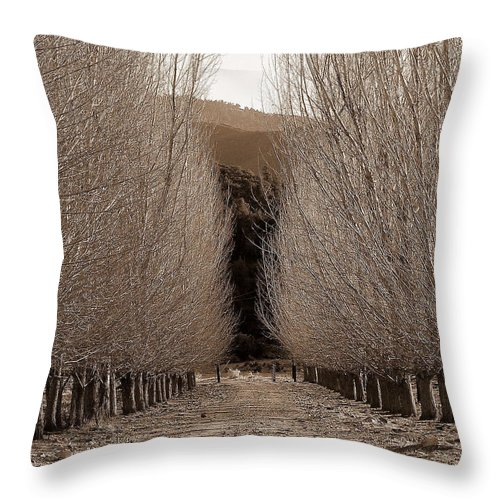 Bare Throw Pillow featuring the photograph Autumn Bares Her Trees by Jeff Lowe
