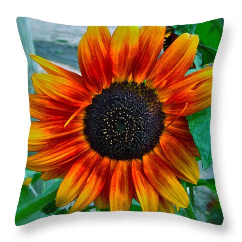Sunflower Throw Pillow featuring the photograph Autumn Blessing by Gwyn Newcombe