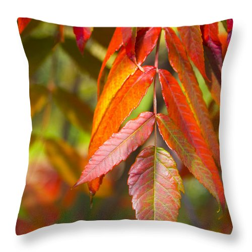 Sumac Throw Pillow featuring the photograph Autumn Bliss by Valerie Fuqua