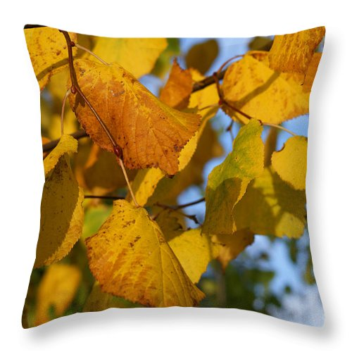 Autumn Throw Pillow featuring the photograph Autumn by Carol Lynch