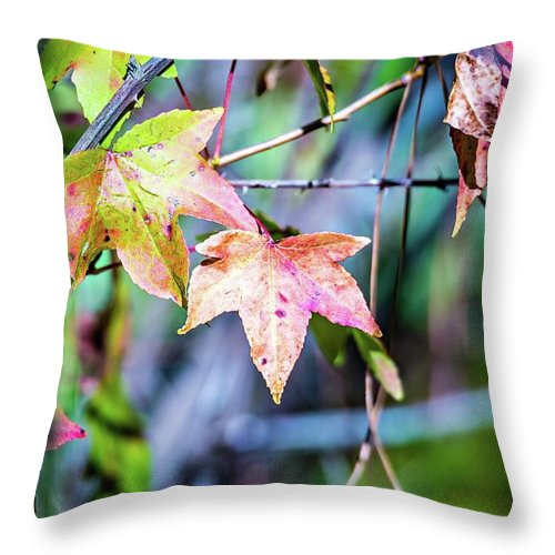 Autumn Throw Pillow featuring the photograph Autumn Color Changing Leaves On A Tree Branch by Alex Grichenko