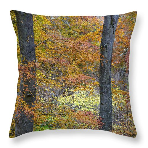 Fall Throw Pillow featuring the photograph Autumn Colours by Phil Crean
