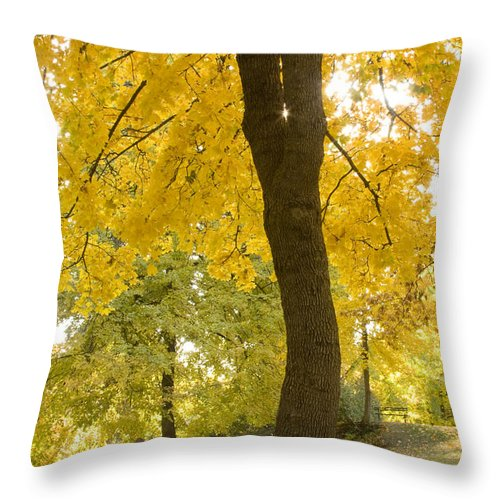 Tree Throw Pillow featuring the photograph Autumn Dance by Idaho Scenic Images Linda Lantzy