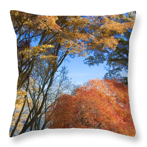 Autumn Throw Pillow featuring the photograph Autumn Day by Steven Natanson