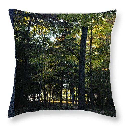 Fall Throw Pillow featuring the photograph Autumn Glen by Tim Nyberg