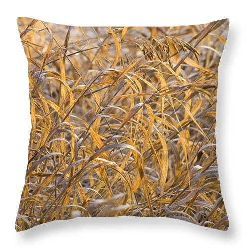 Autumn Throw Pillow featuring the photograph Autumn Glow by Idaho Scenic Images Linda Lantzy
