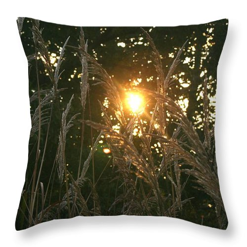 Light Throw Pillow featuring the photograph Autumn Grasses In The Morning by Nadine Rippelmeyer