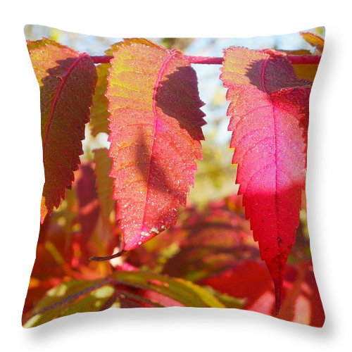 Nature Throw Pillow featuring the photograph Autumn Has Arrived by Peggy King