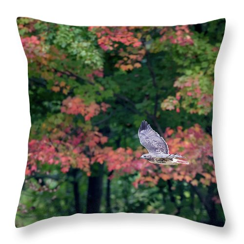 Square Throw Pillow featuring the photograph Autumn Hawk Square by Bill Wakeley