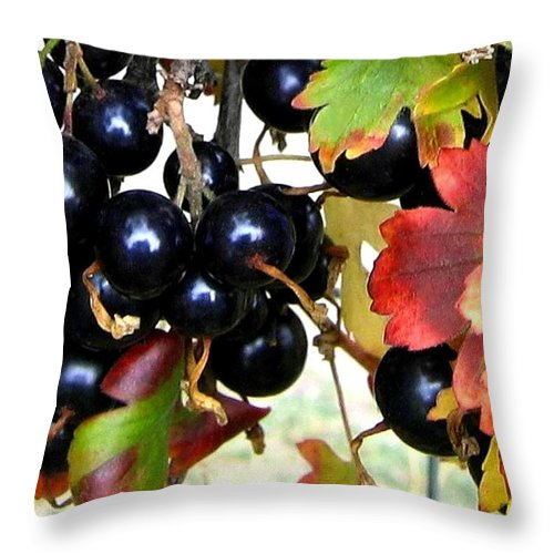 Autumn Throw Pillow featuring the photograph Autumn Jostaberries by Will Borden