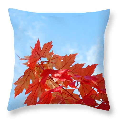 Autumn Throw Pillow featuring the photograph Autumn Landscape Fall Leaves Blue Sky White Clouds Baslee by Baslee Troutman