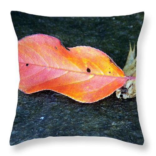 Macro Throw Pillow featuring the photograph Autumn Leaf In August by William Tasker