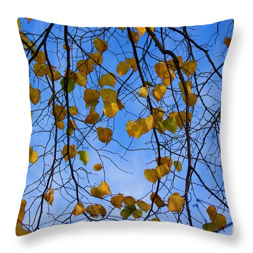 Autumn Throw Pillow featuring the photograph Autumn Leaves by Carol Lynch