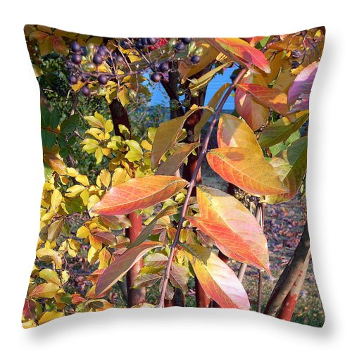 Fall Pictures Throw Pillow featuring the photograph Autumn Leaves by Karin Dawn Kelshall- Best