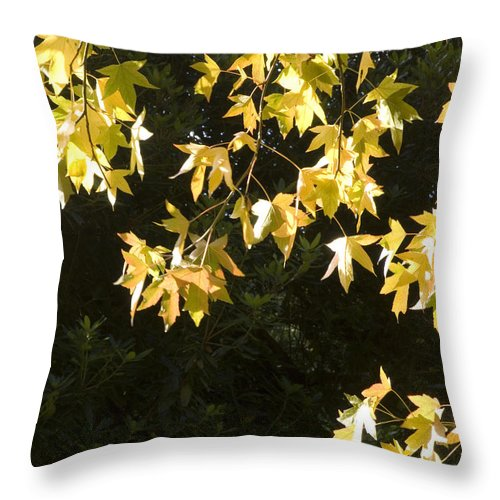 Acer Throw Pillow featuring the photograph Autumn Leaves by Mike Lester