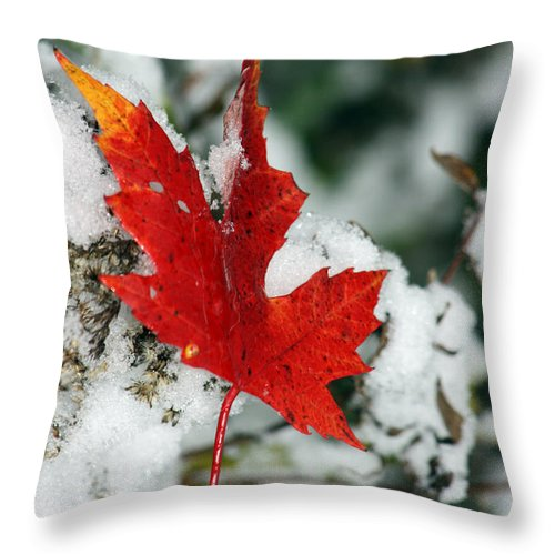 Autumn Throw Pillow featuring the photograph Autumn Meets Winter by Cathy Beharriell