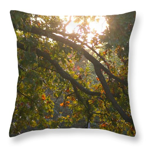 Autumn Throw Pillow featuring the photograph Autumn Morning Glow by Nadine Rippelmeyer