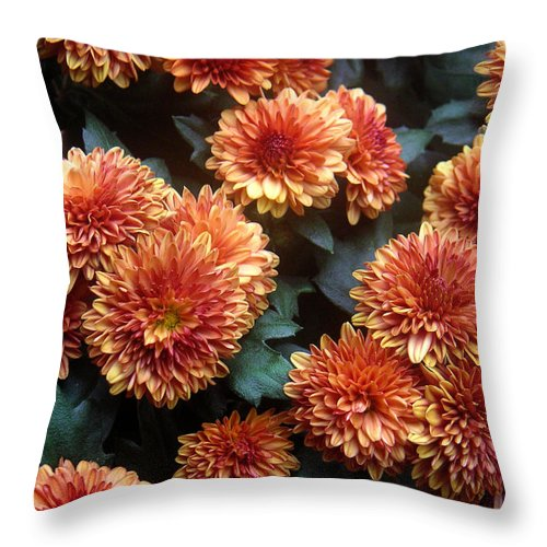 Nature Throw Pillow featuring the photograph Autumn Mums - A Group Portrait by Lucyna A M Green